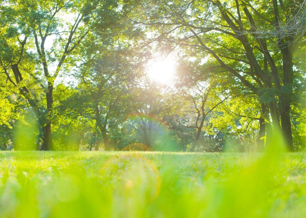 Green, sunny meadow